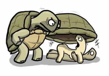 Infidelidad tortugas